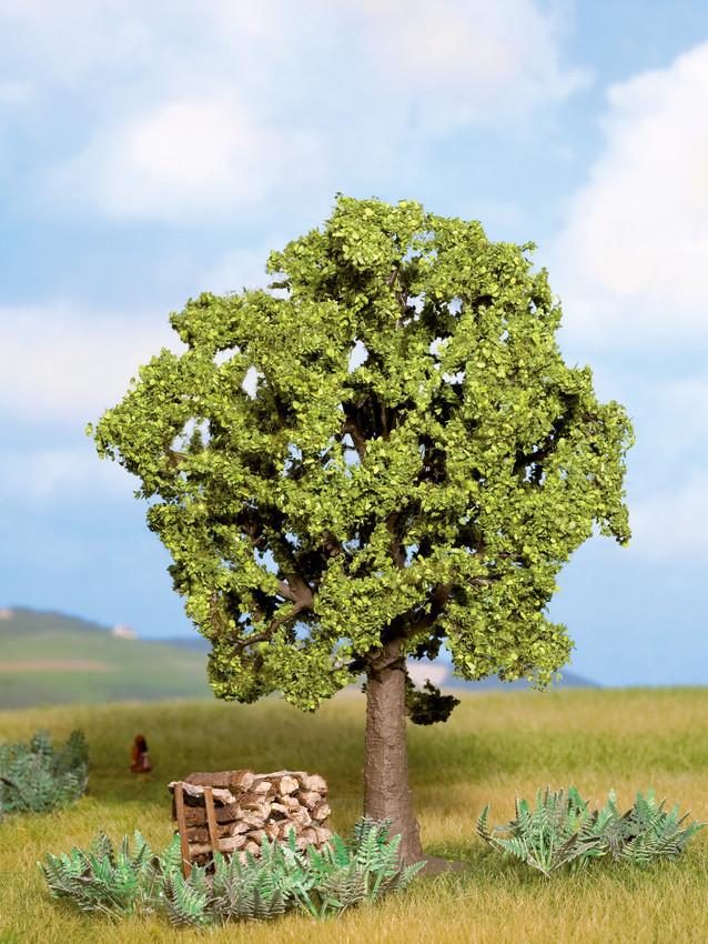 Noch - Árvore, Faia (Beech) - Multi Escala: 21690