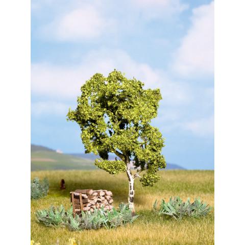 Noch - Árvore, Vidoeiro (Bétula) - Multi Escala: 21640