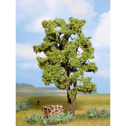 Noch - Árvore, Acácia - Multi Escala: 21660