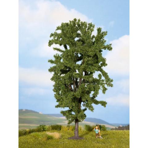 Noch - Castanheiro-da-índia (Horse Chestnut Tree) - Multi Escala: 25895